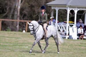 Allrounder Show Hunter Pony